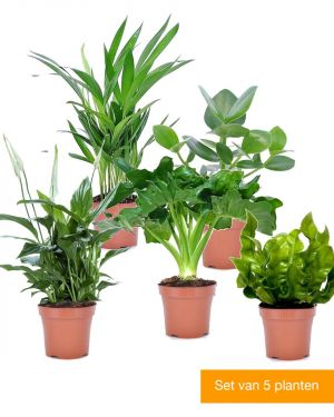 Set van 5 luchtzuiverende kamerplanten