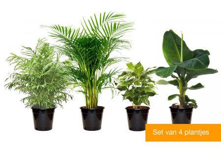 Set van 4 trendy kamerplanten