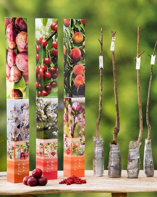 Set van 5 fruitbomen